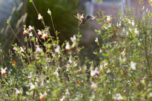 Hummingbirds love to visit