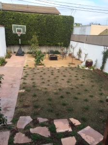Backyard After Turf Removal
