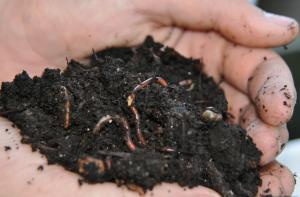 Rich Compost